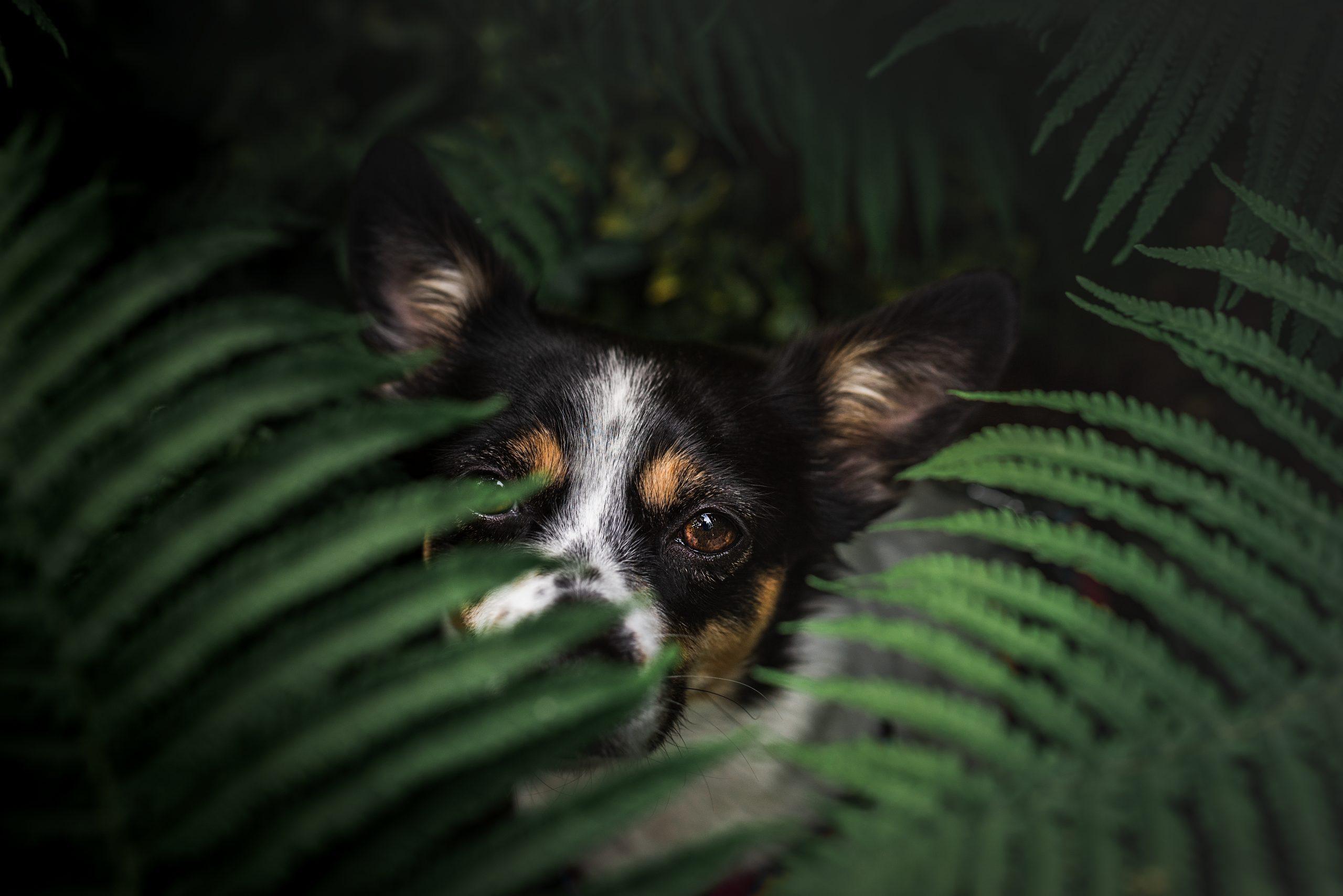 Piesografia - Angela Wolińska Twój Psi Fotograf w Krakowie - sesja portretowa psa