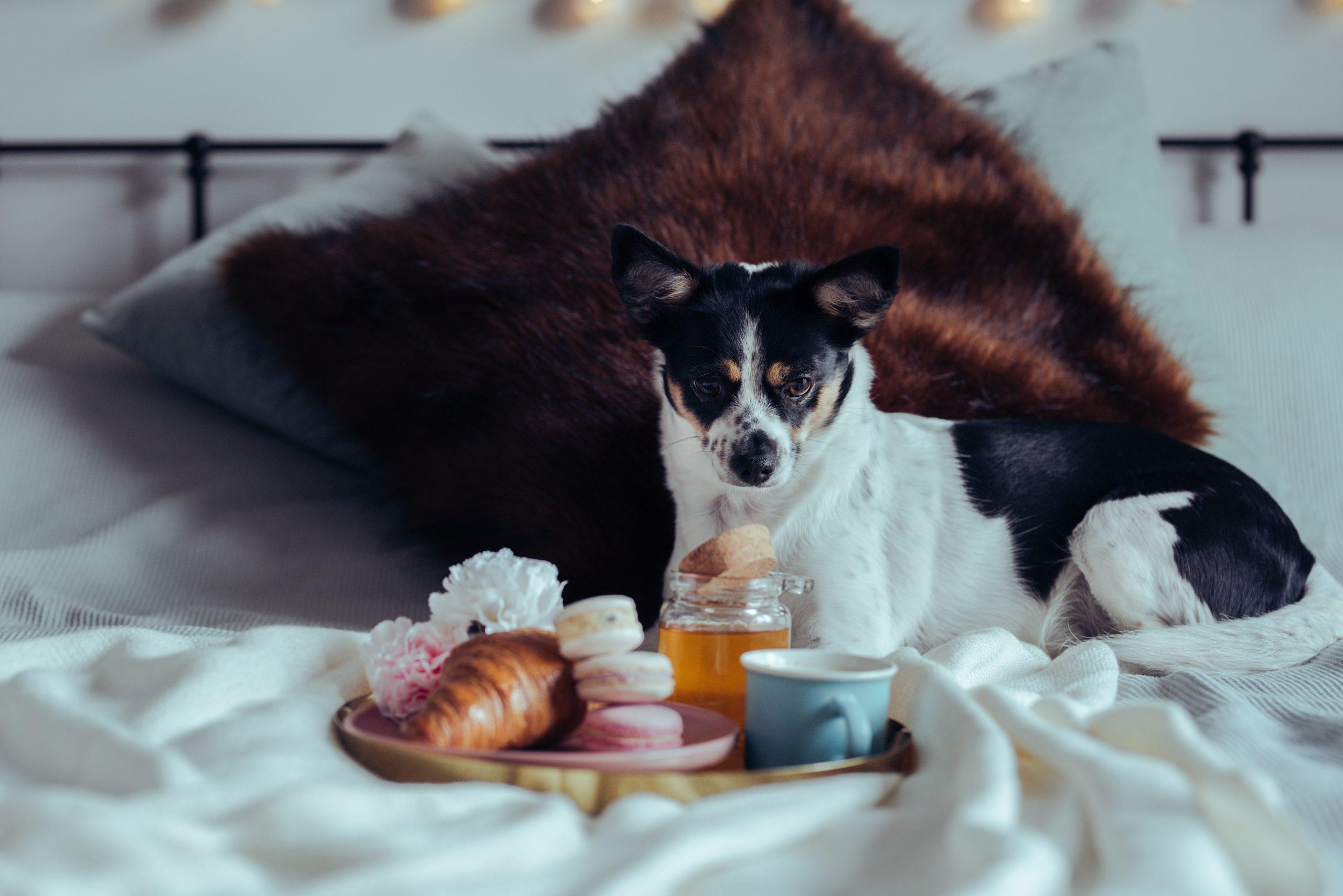 Food Photography - piesografia - angela wolińska - fotograf psów i kotów w Krakowie